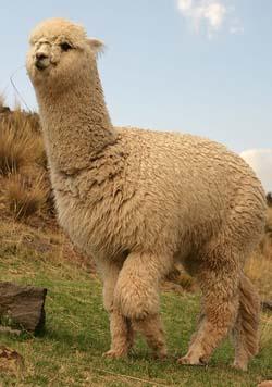 Натуральные волокна животного происхождения шерстяные