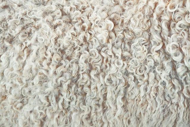 Одеяло из овечьей шерсти